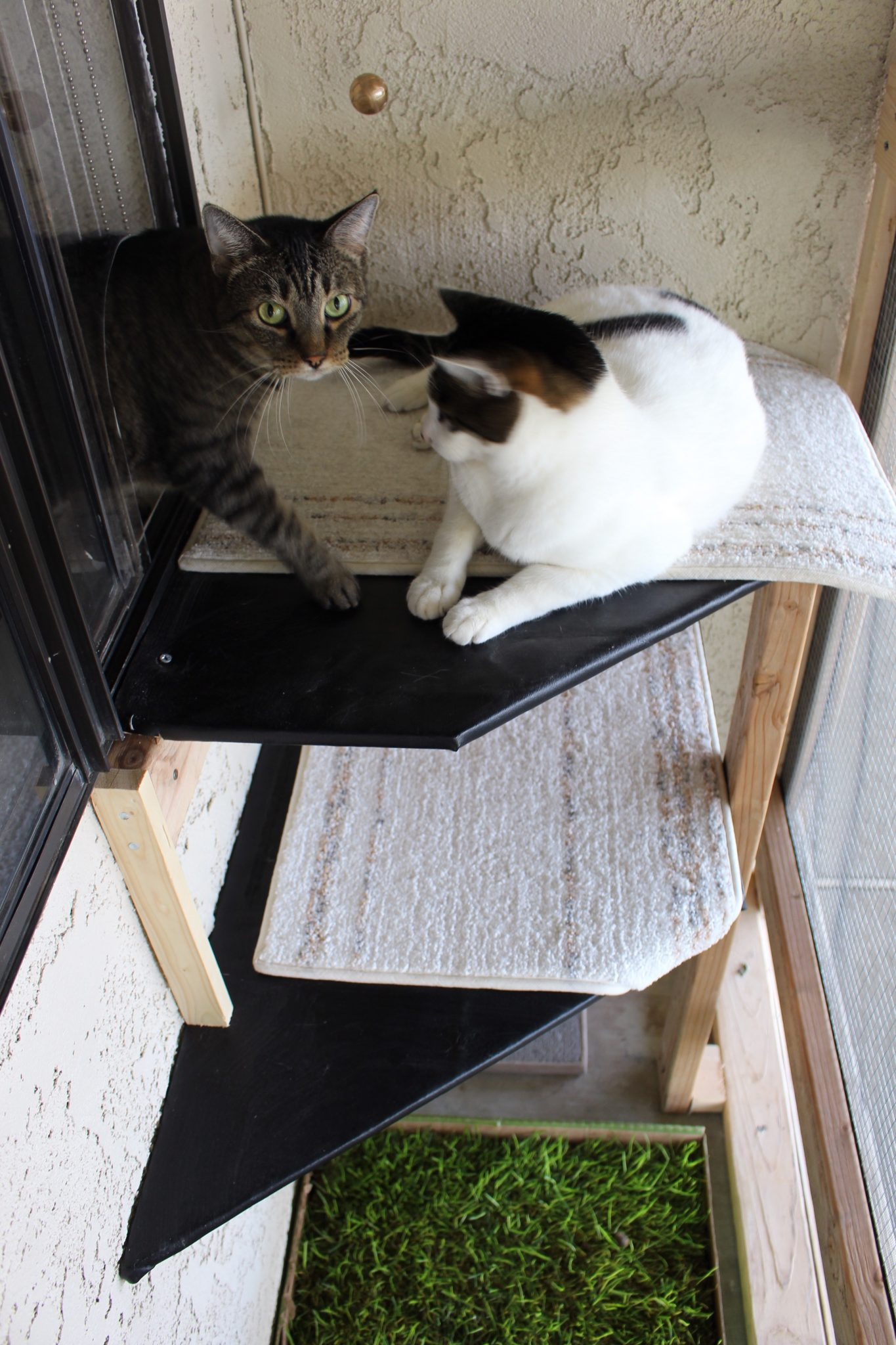 Georgie and Frankie took to their catio right away, their owner Alicia Haney says. (Photo: Alicia Haney)