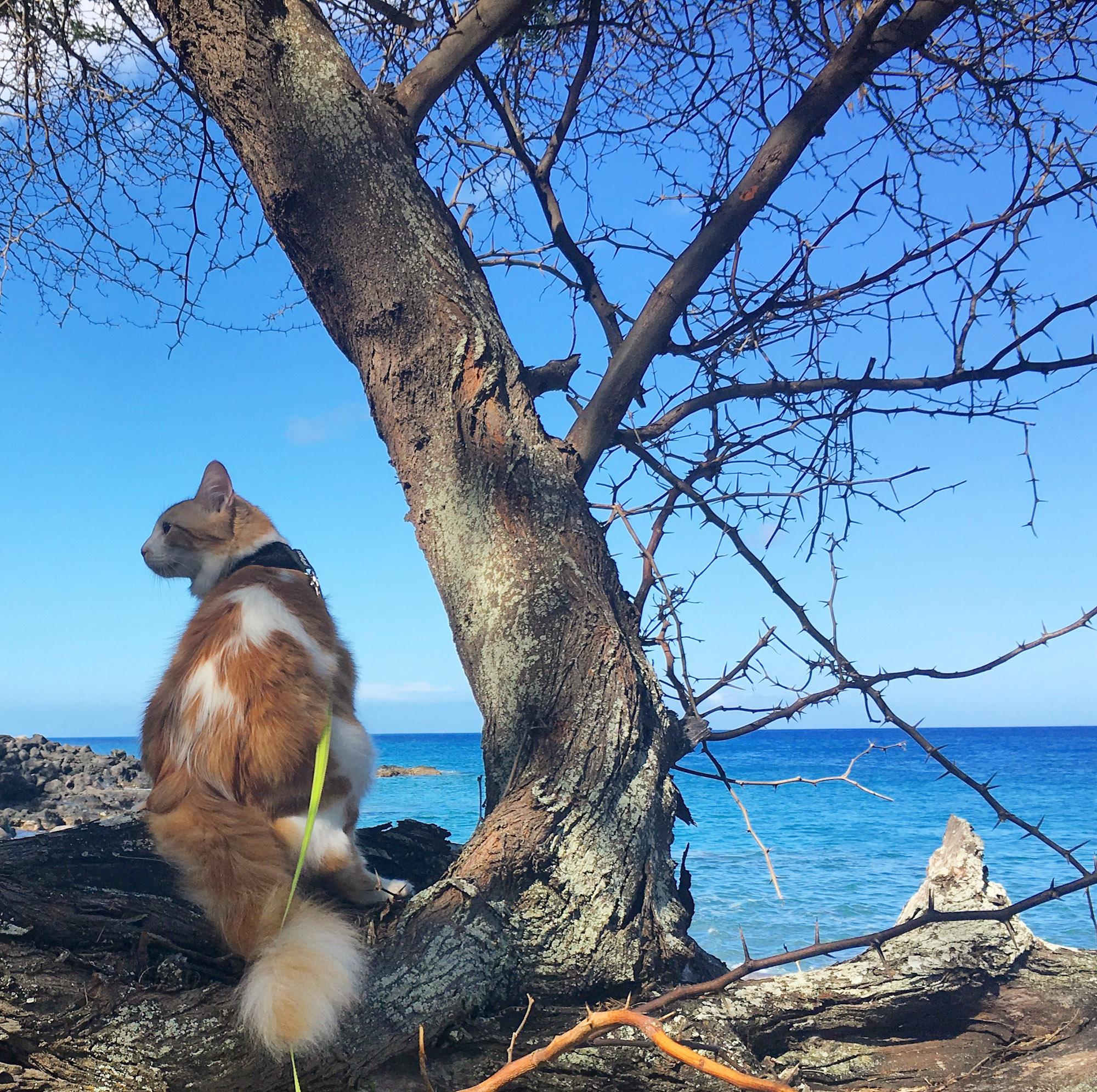 adventure cat looking at ocean