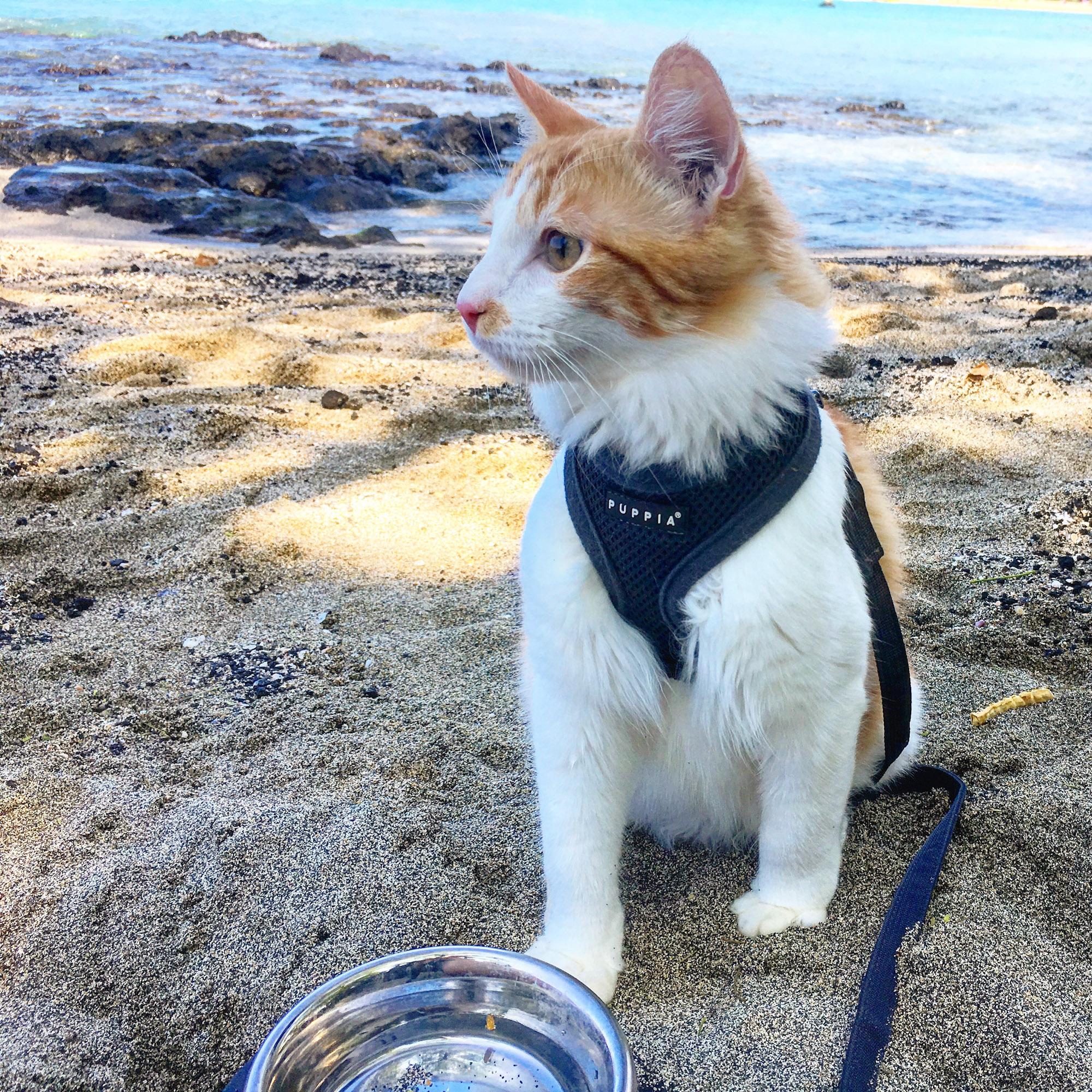 advneture cat on beach