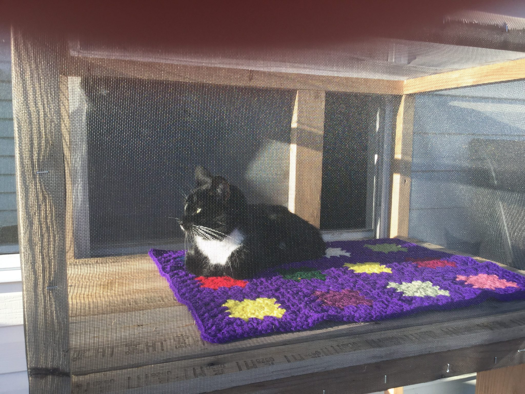 Cat sits on catio in sunshine