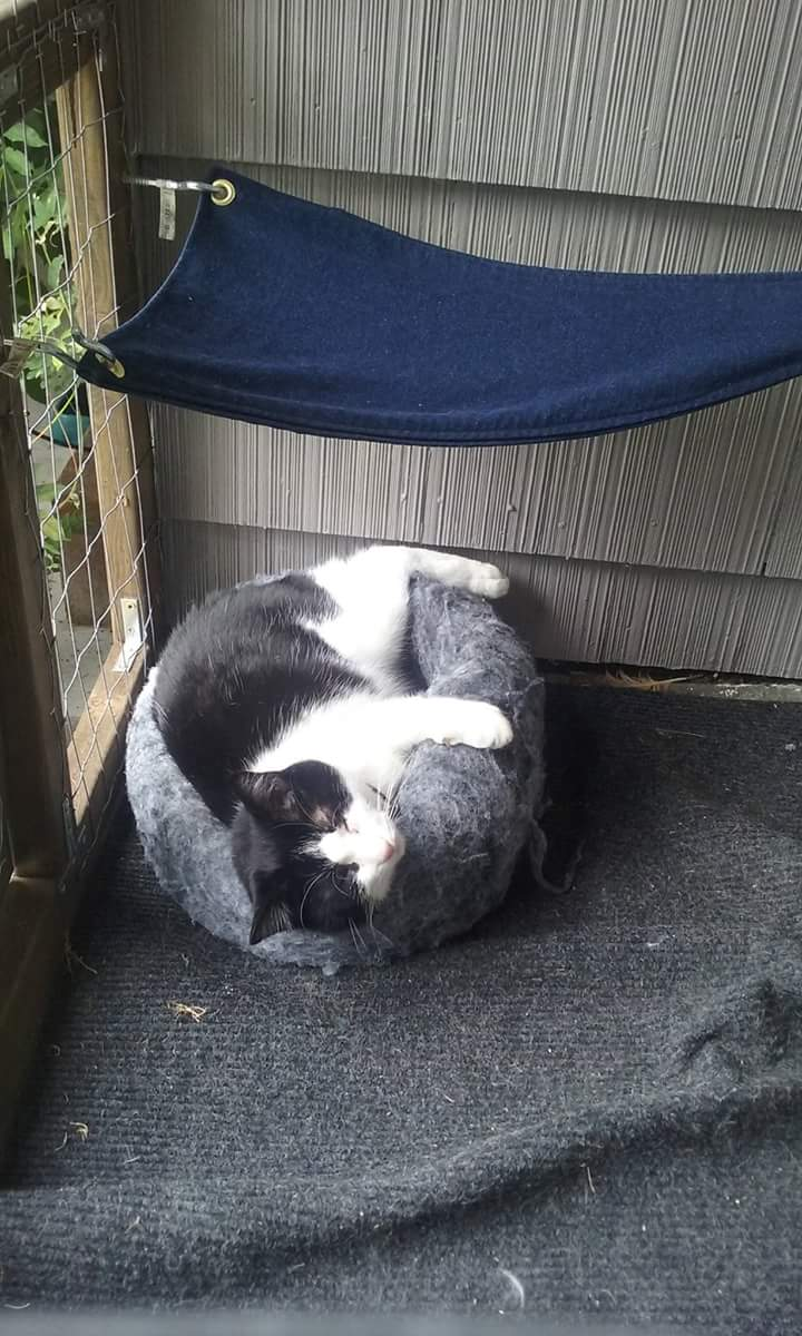 Walter the cat is often found curled up on his catio bed. (Photo: Holli Johannes)