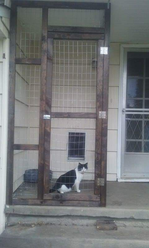 Catio has doggy door