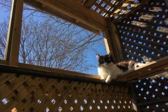 Cat on shelf in catio in sunlight