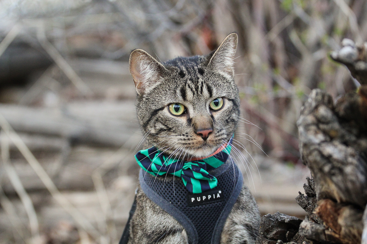 Jasper might just be the most dapper adventure cat we've ever seen.  (Photo: Dave Keir)