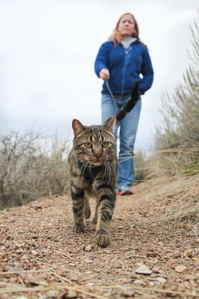 Jasper is a fearless adventure cat.  (Photo: Dave Keir)