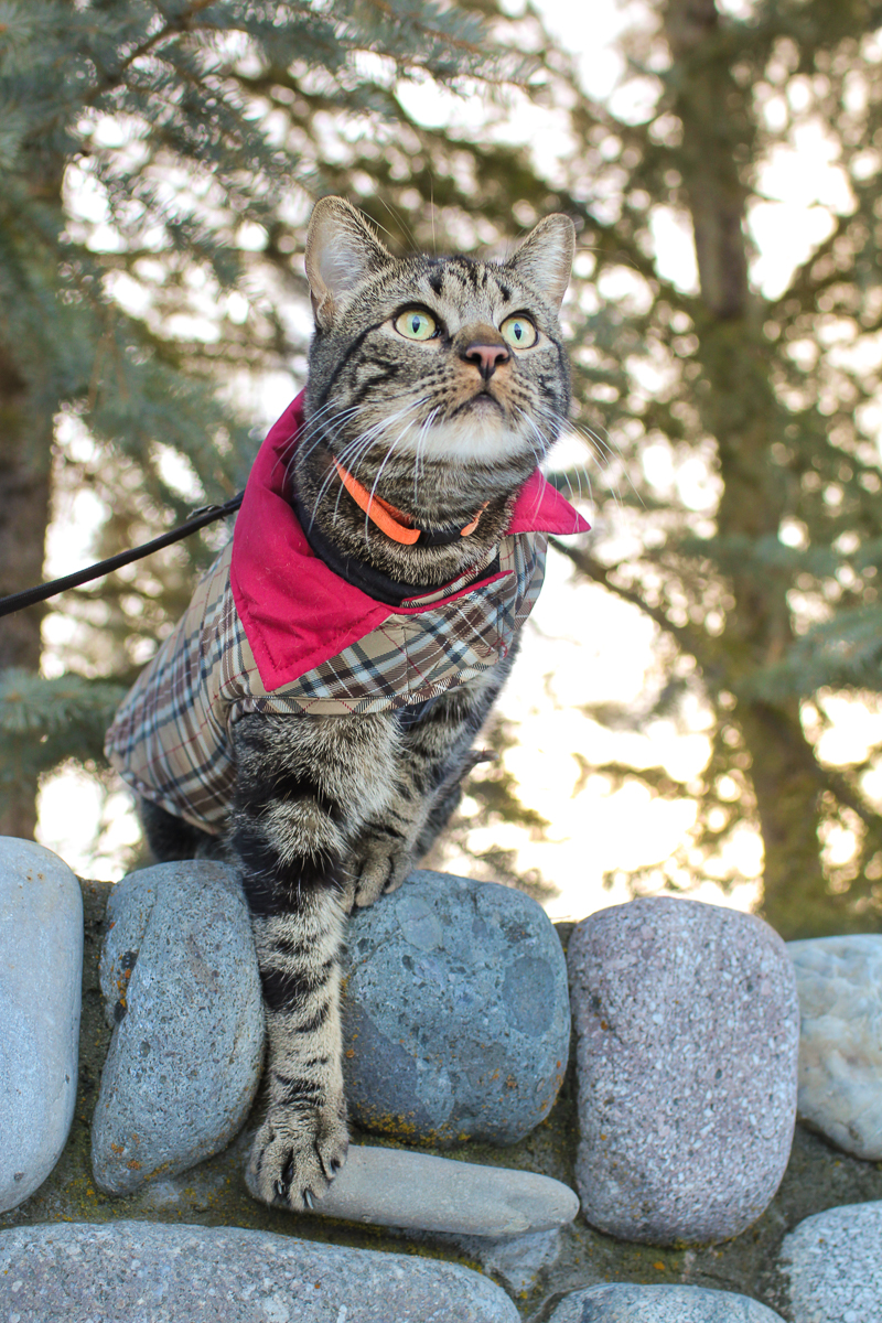This handsome cat has style! (Photo: Dave Keir)