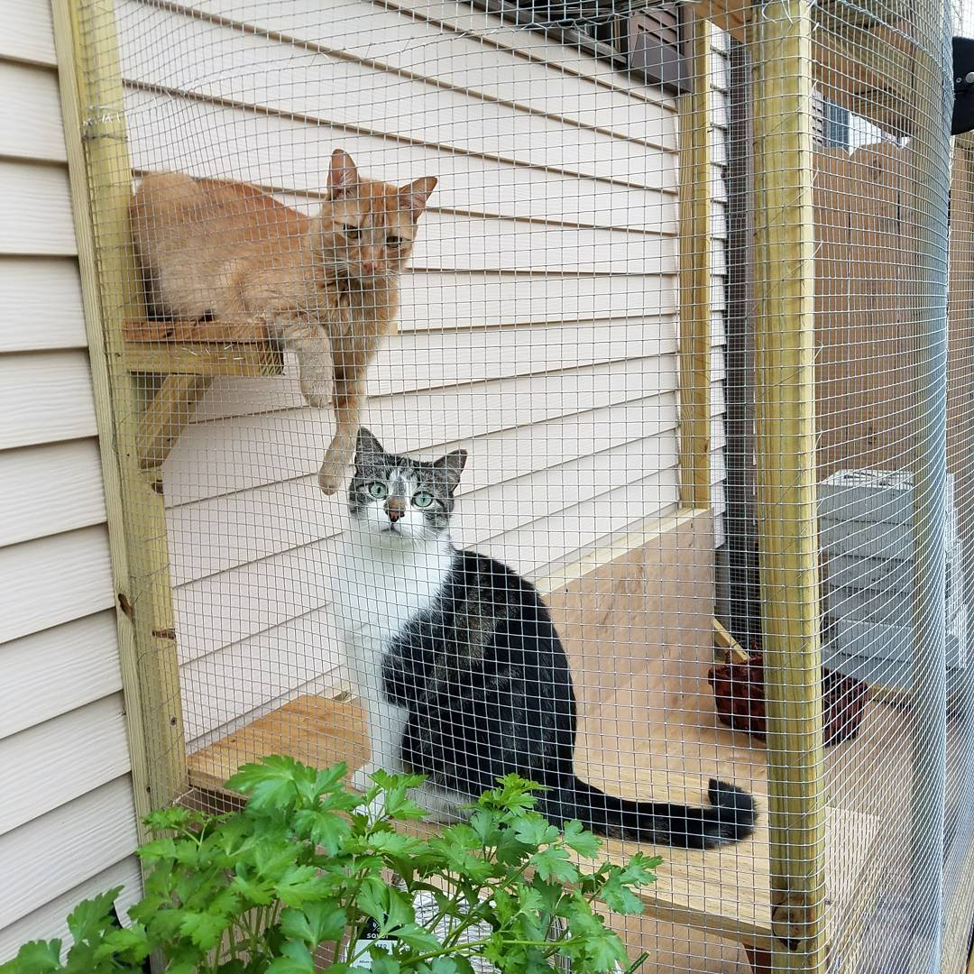 Simon and Ezra are two very different cats, but they both love being outside in their catio. (Photo: Jordan Hardiman)