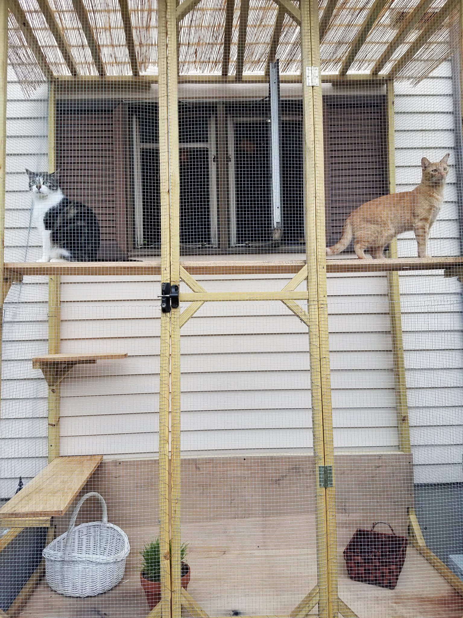 One of these is an adventure cat, can you tell? But they both love the catio equally! (Photo: Jordan Hardiman)