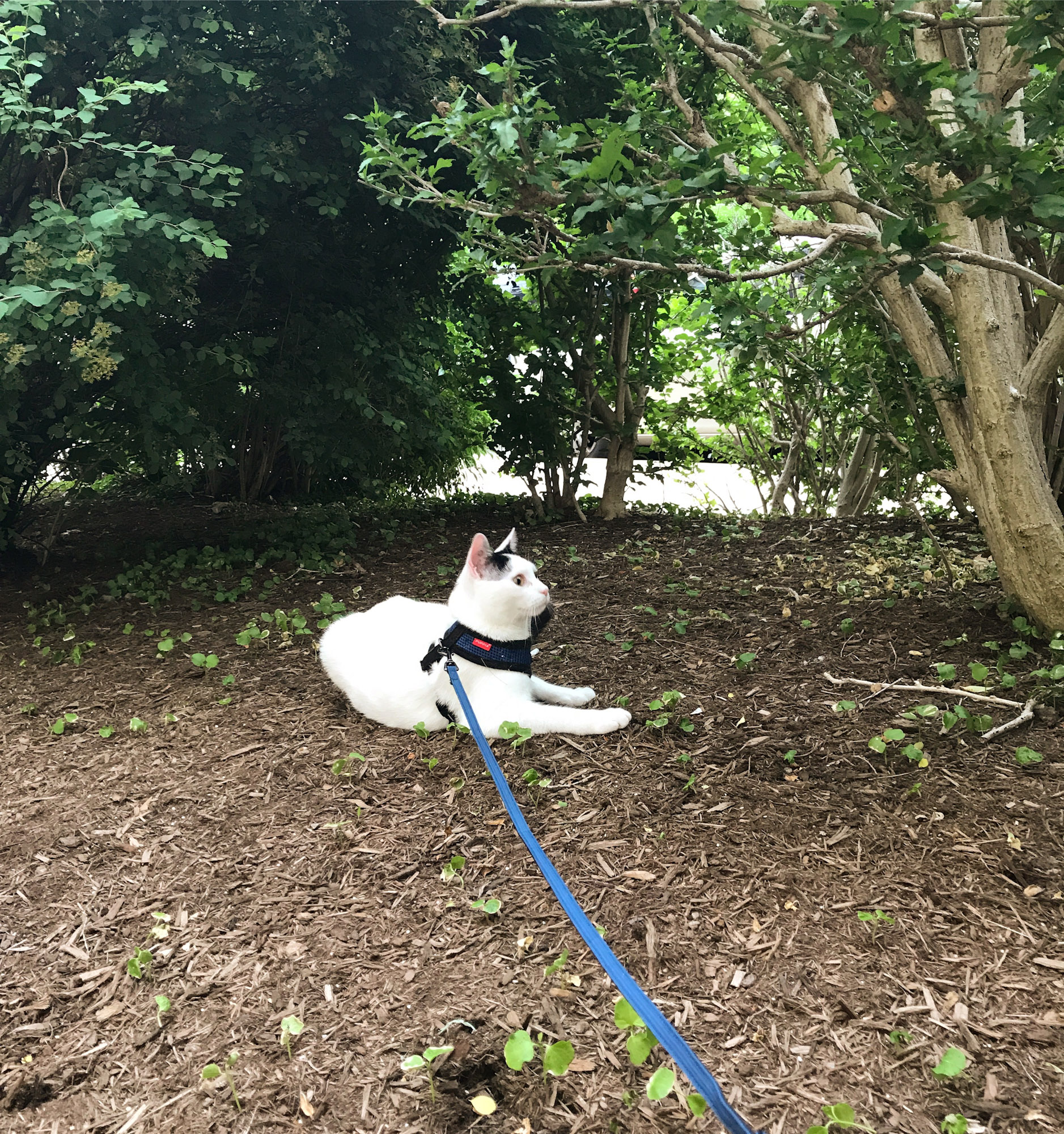 Milo the adventure cat