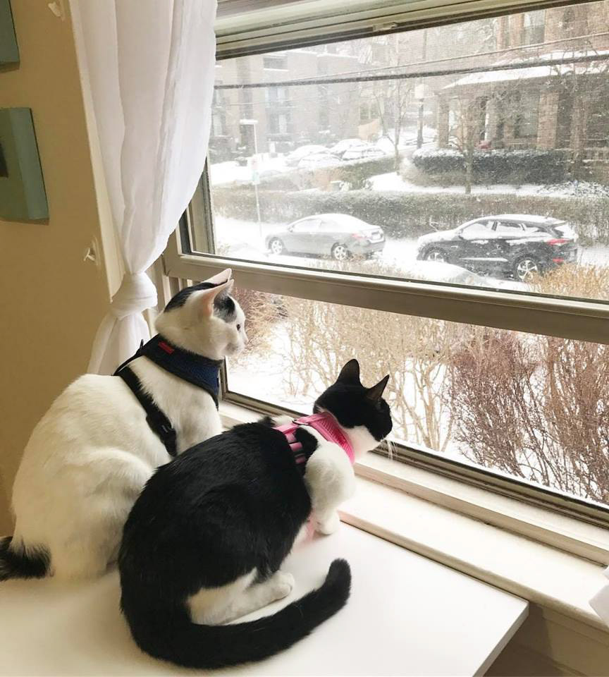 Milo and Lily cats look out window