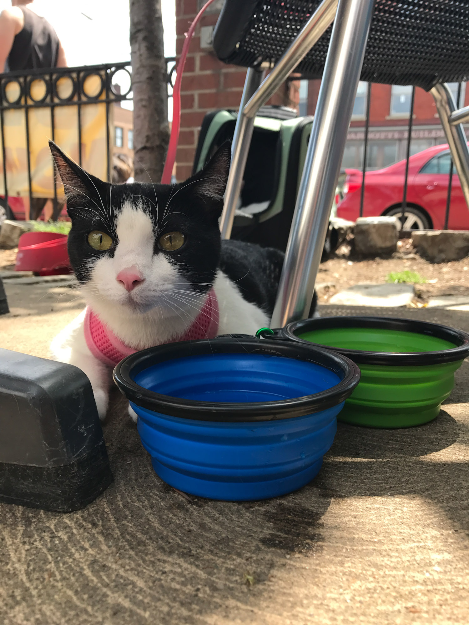 cat at Pittsburgh restaurant