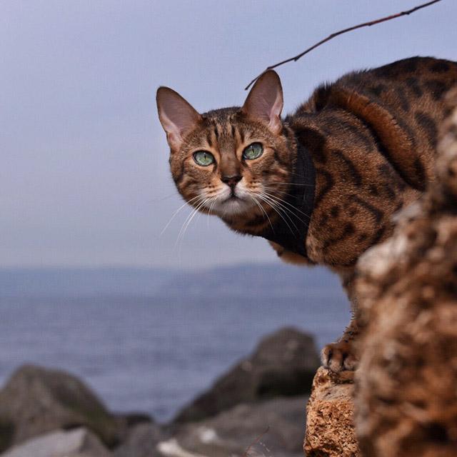 Romeo the adventure cat