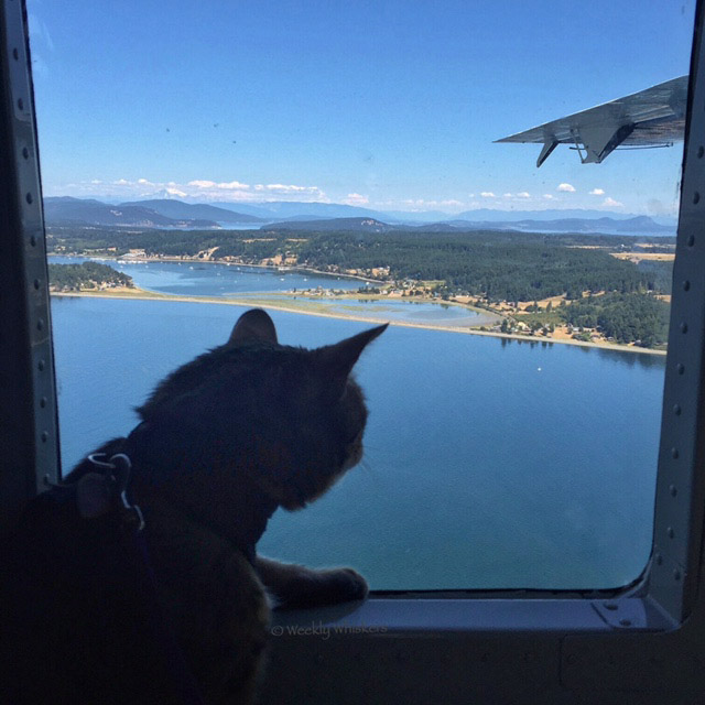 Romeo the cat on airplane