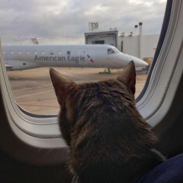 Romeo looking out airplane window at airport