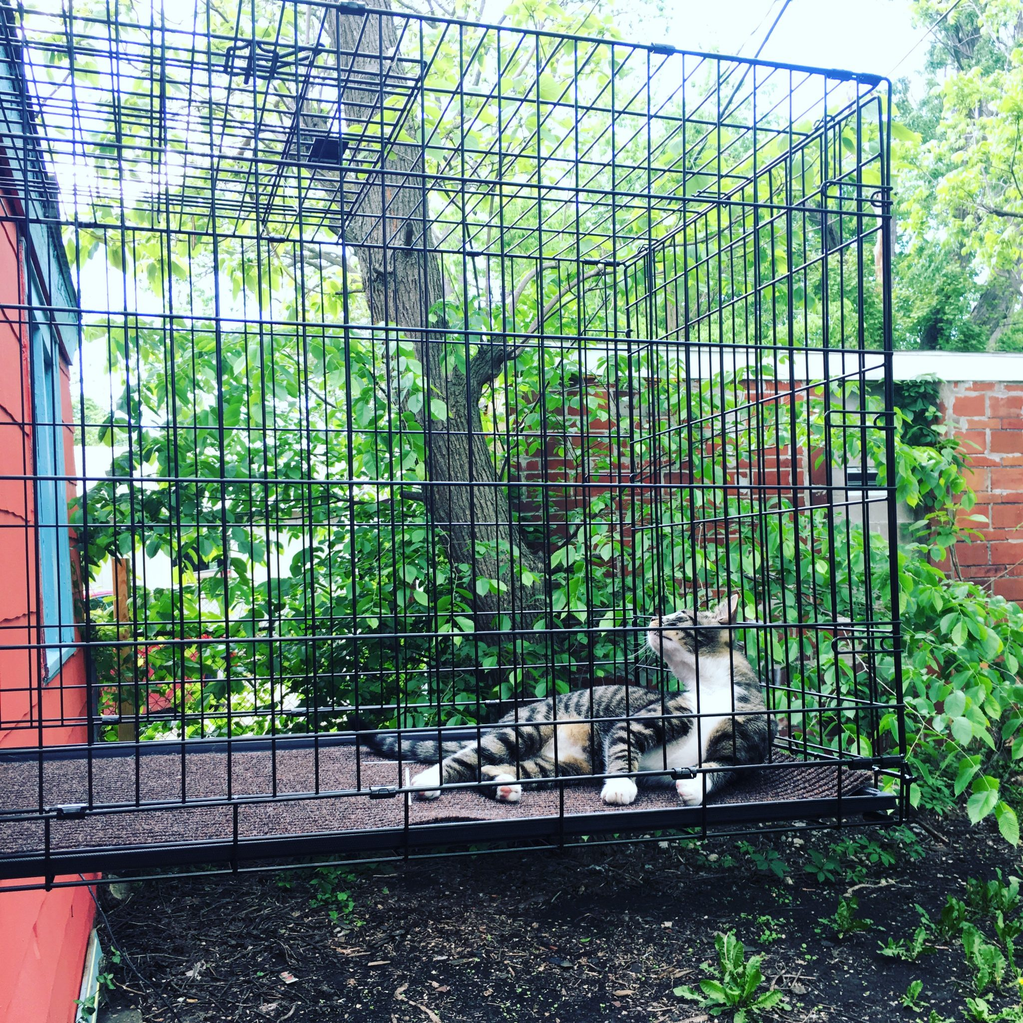 Cat in dog crate catio