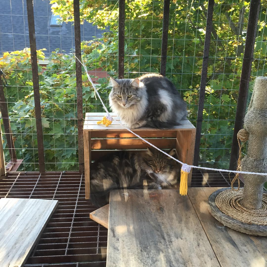Forest cats on catio