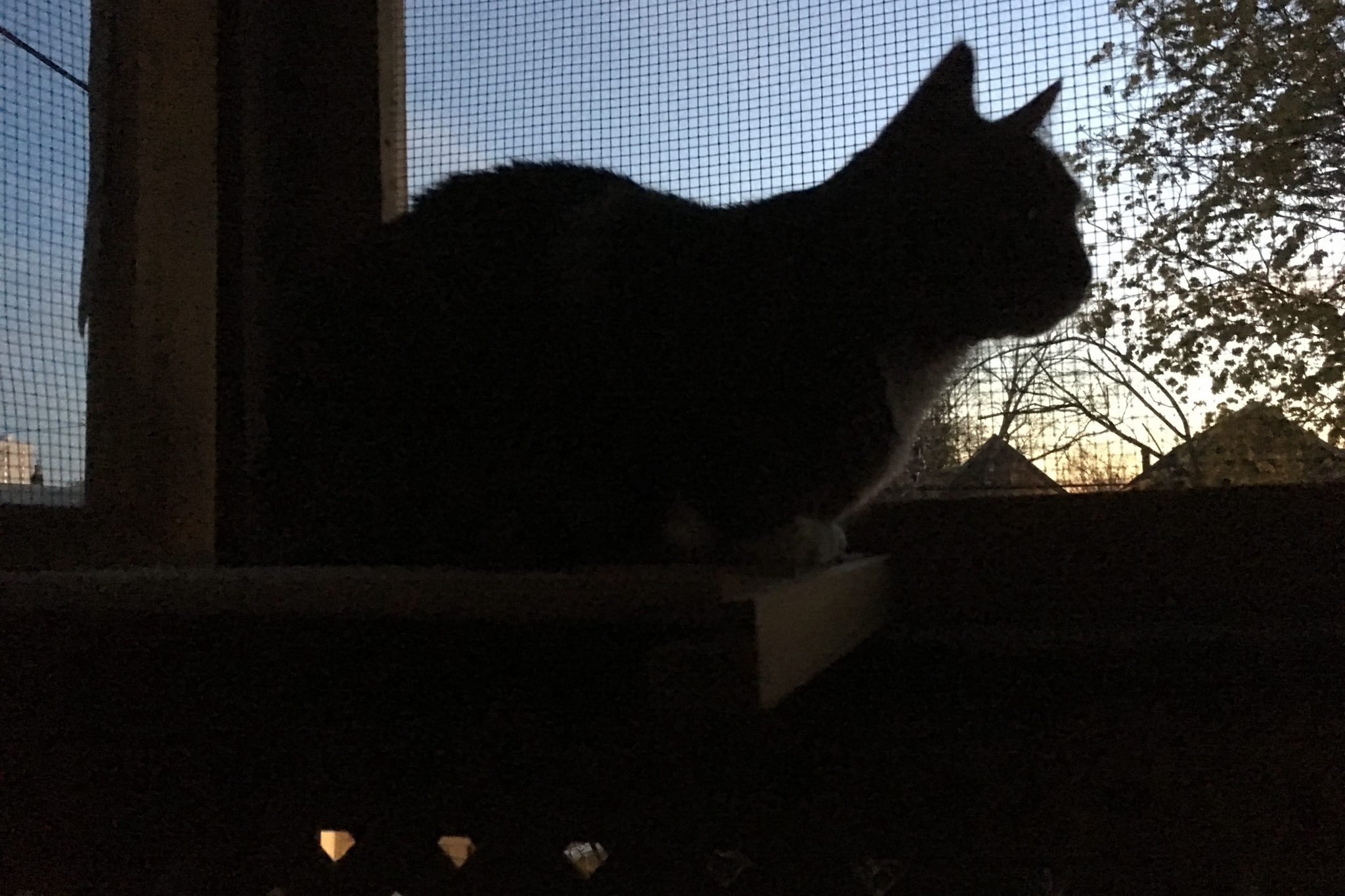 Cat silhouette on catio