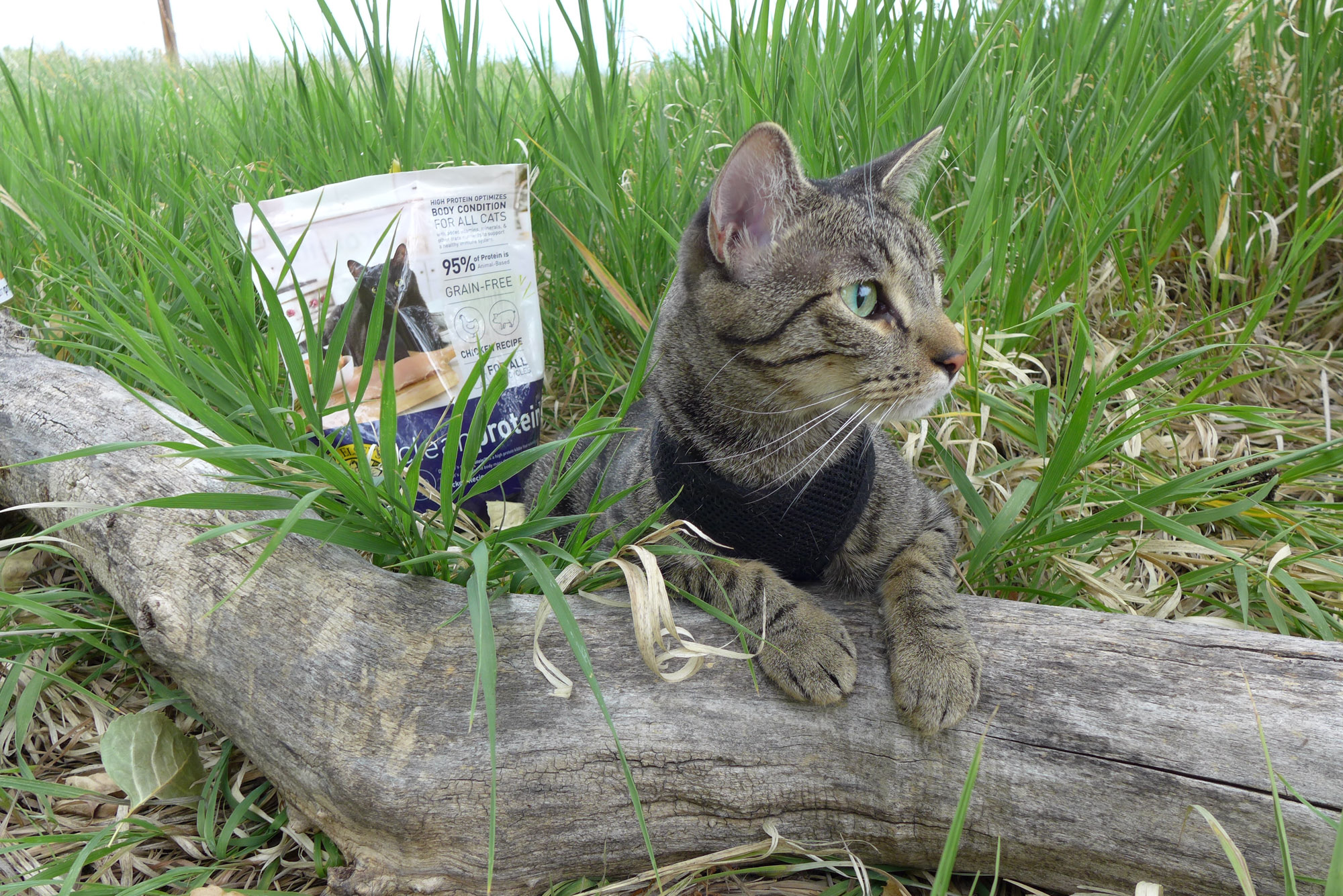 Dr. Elsey's cleanprotein cat food