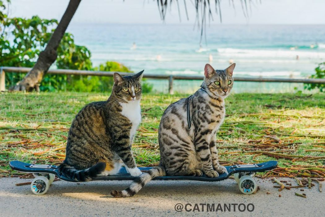 Didga and Boomer the cats on a skateboard