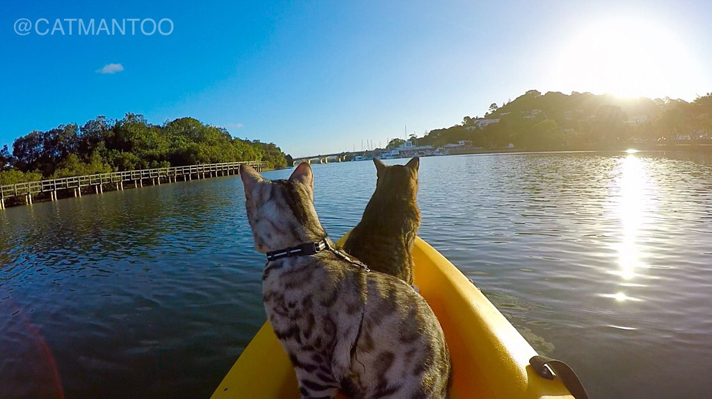 Didga and Boomer riding in kayak