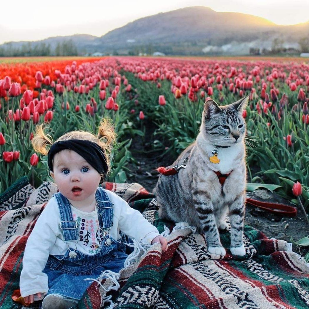 Winter and Shasta in a field of flowers
