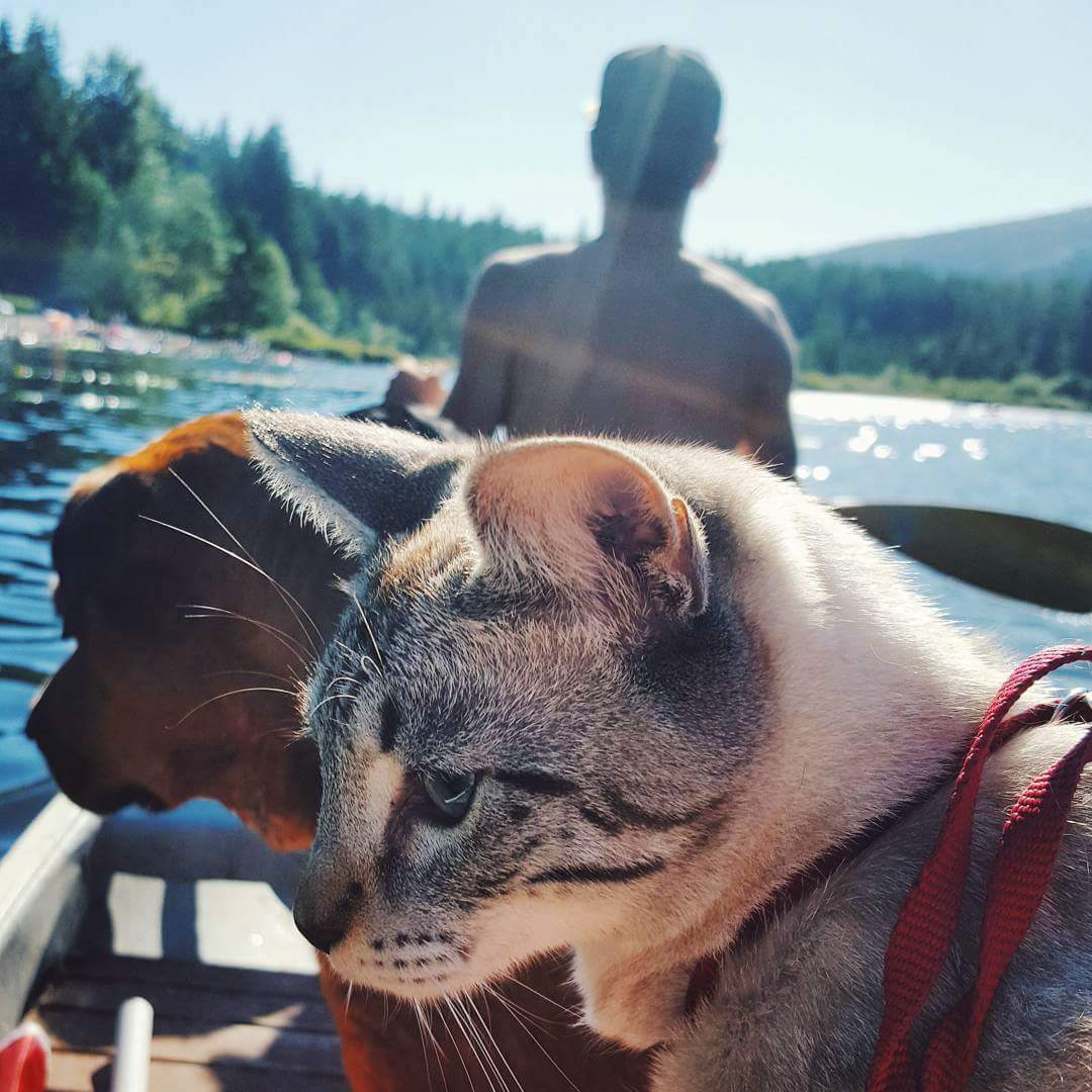 Cat and dog are in boat