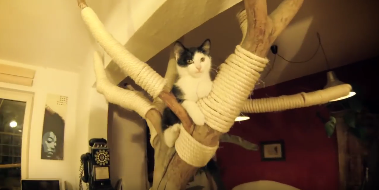 cat tree made from tree