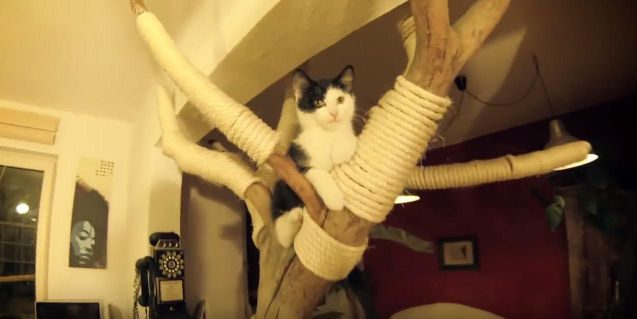 cat tree made from tree
