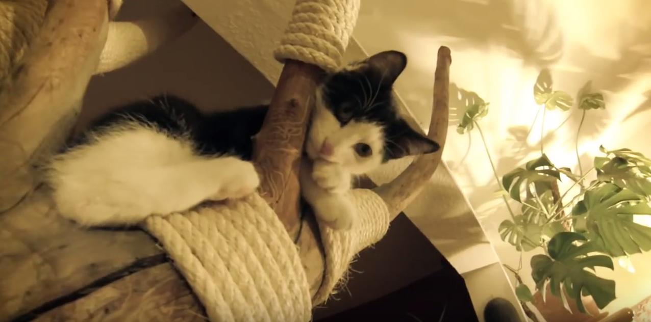 cat climbing cat tree made from tree