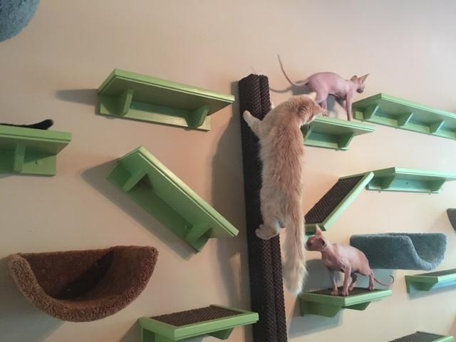 cats climbing on wall shelves