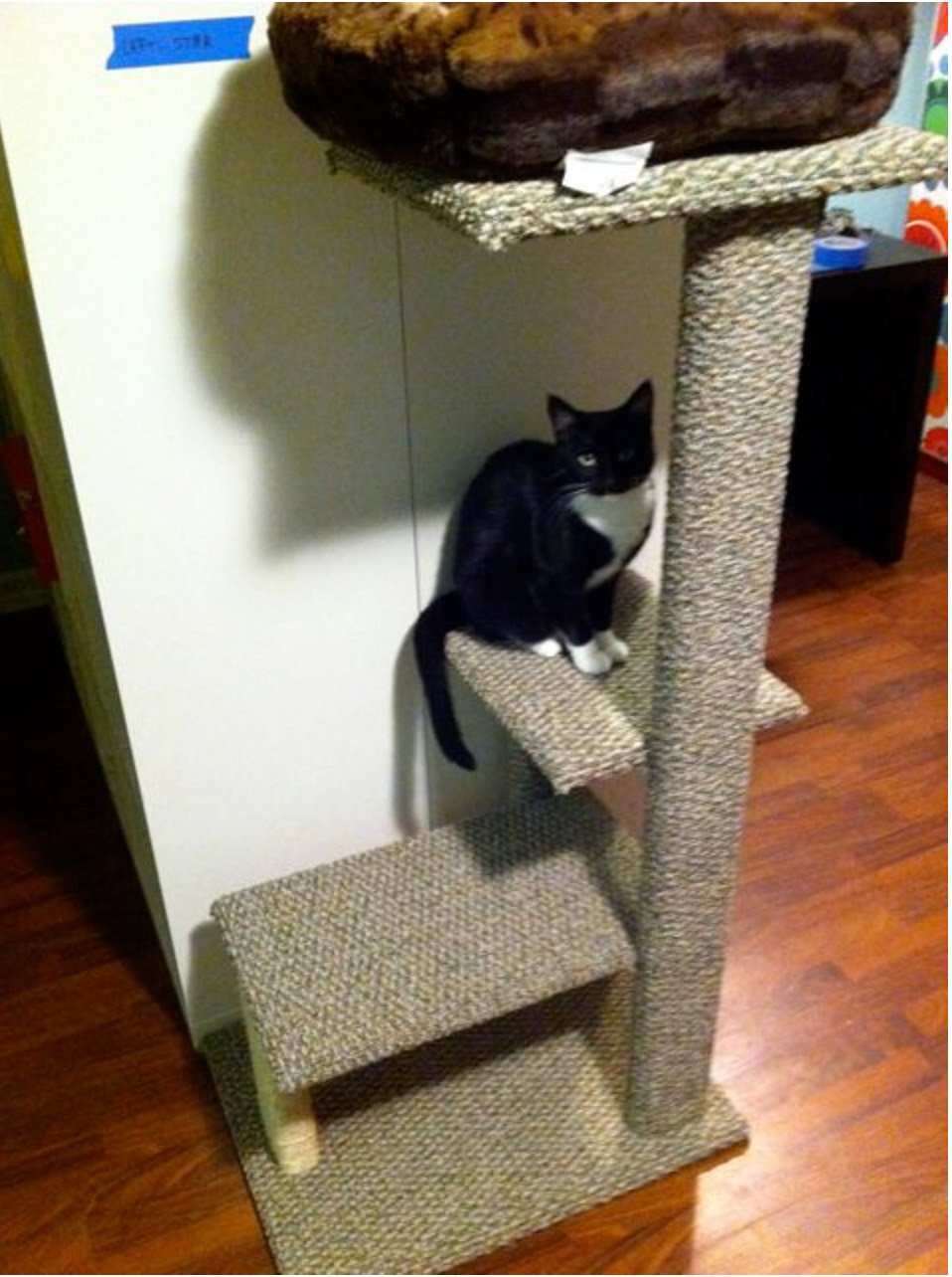 cats using homemade cat tree