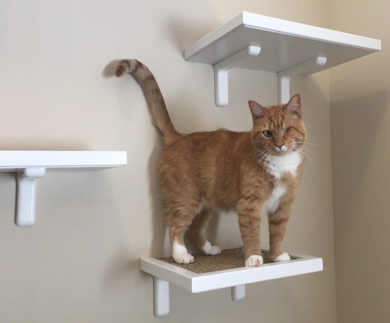 shelves for cat