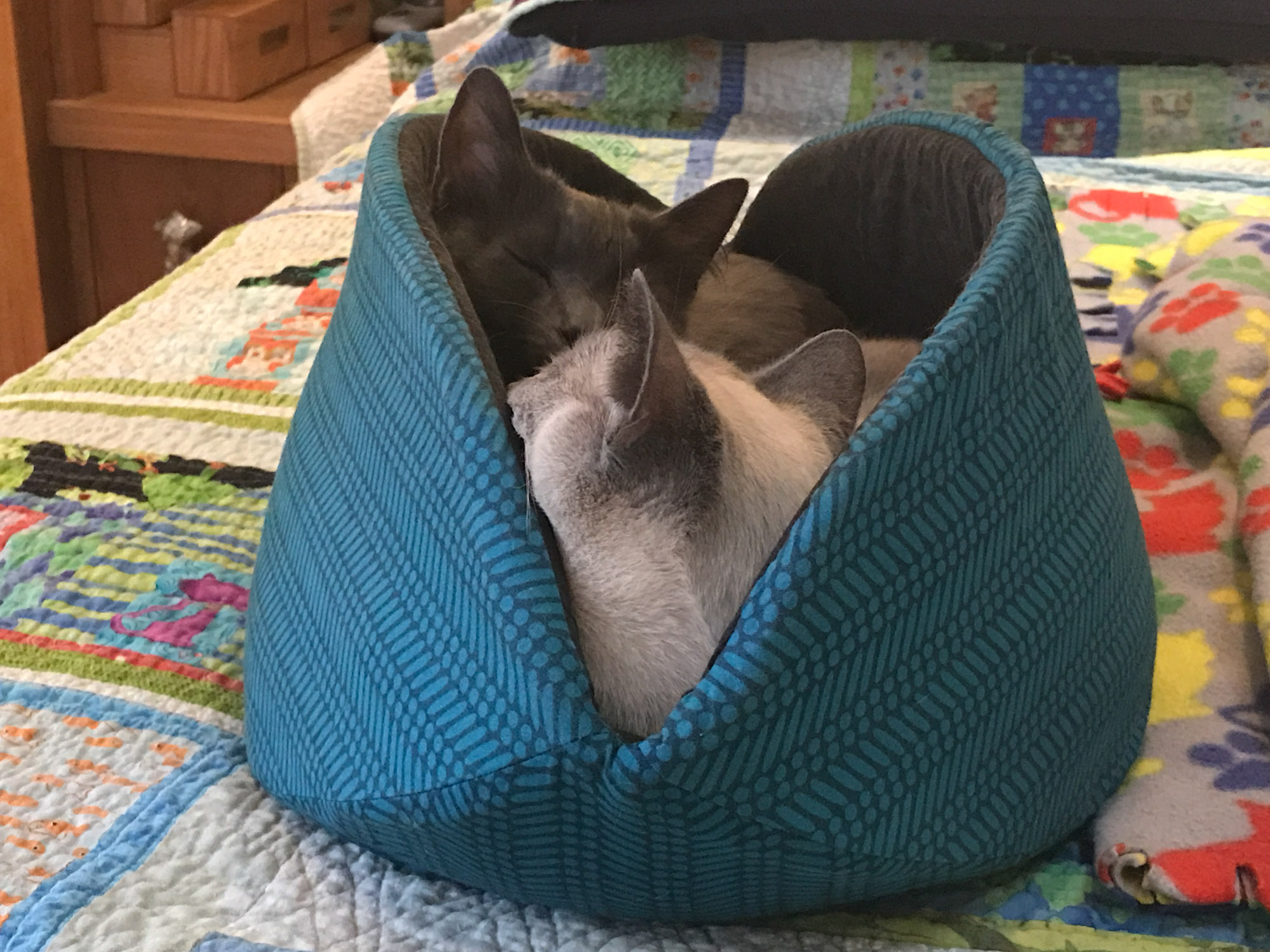two cats snuggling in small cat bed