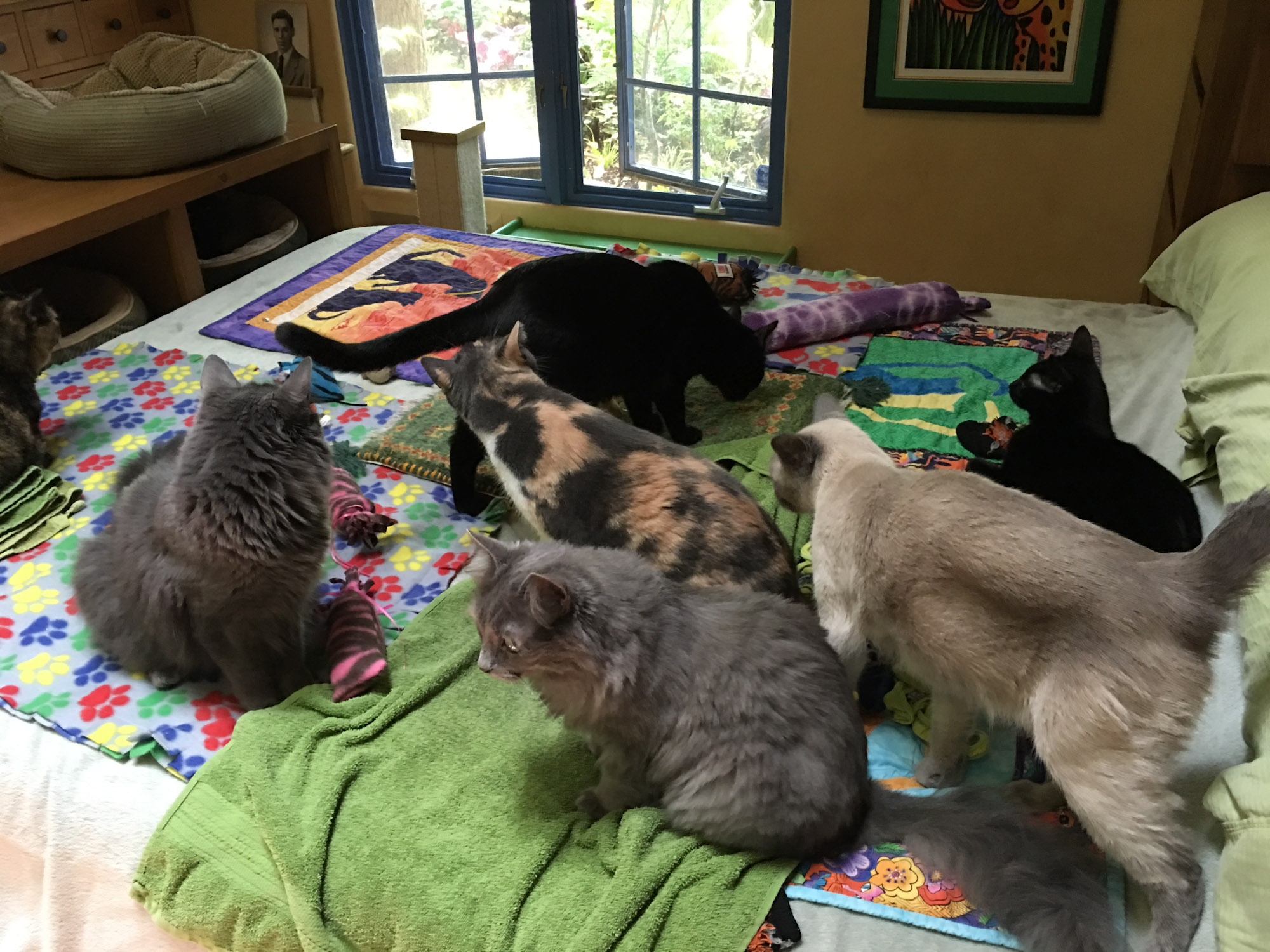 seven cats on bed