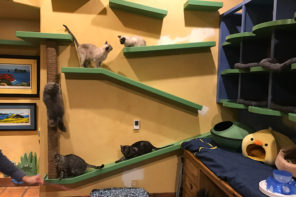 cats playing on wall shelves