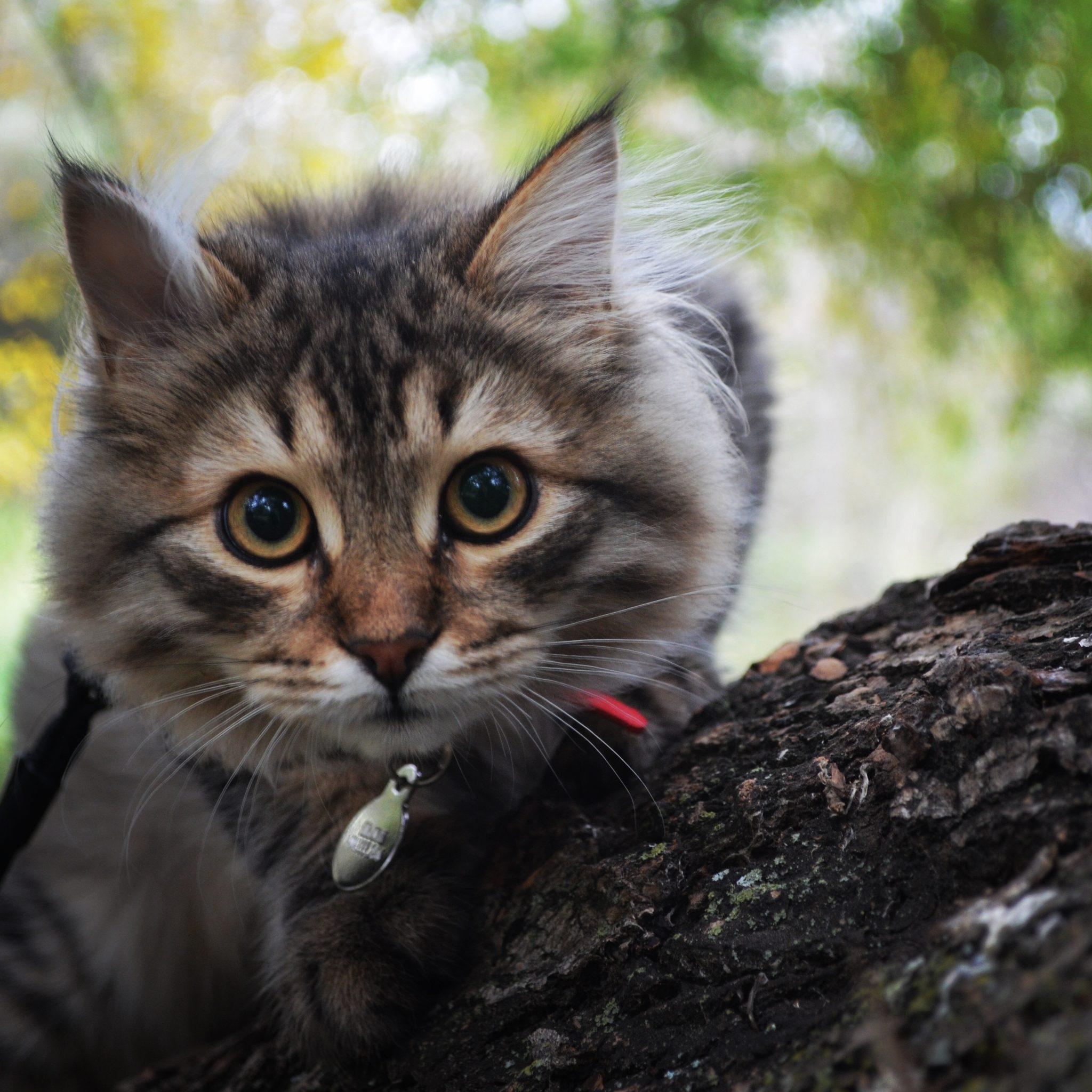 McKinely as a kitten