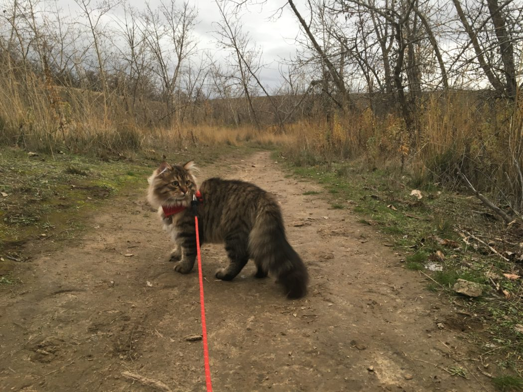 McKinley hiking on trail