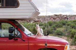 Vladimir the adventure cat on RV