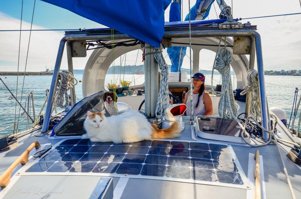 Salty Sea Cat on Boat