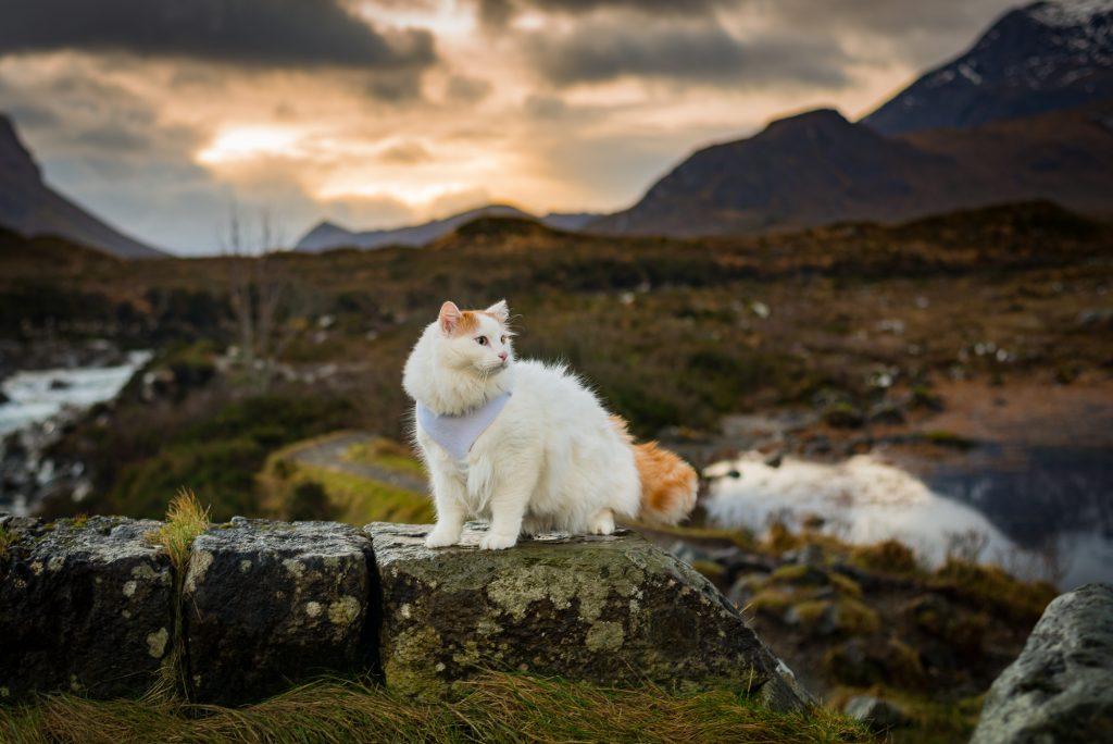 Salty Sea Cat on Land