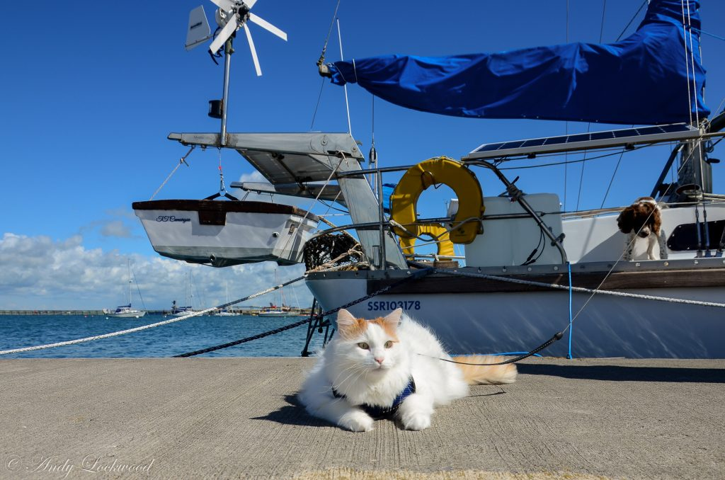 Salty Sea Cat with Boat