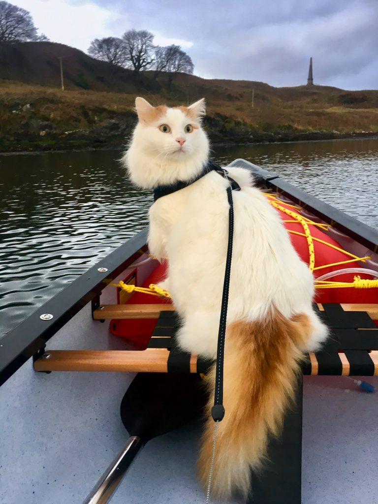 Salty Sea Cat in Canoe