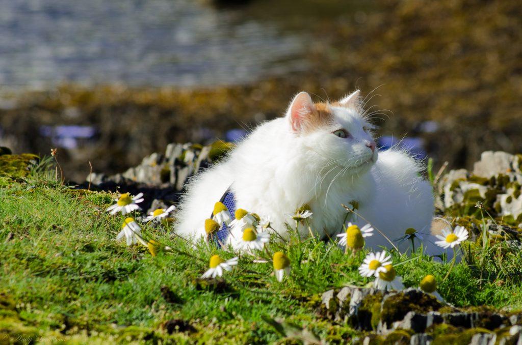 Salty Sea Cat in Flowers