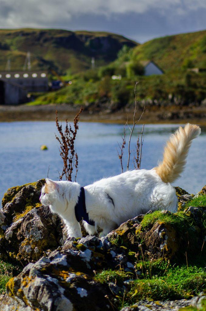 Salty Sea Cat Explores Rocks