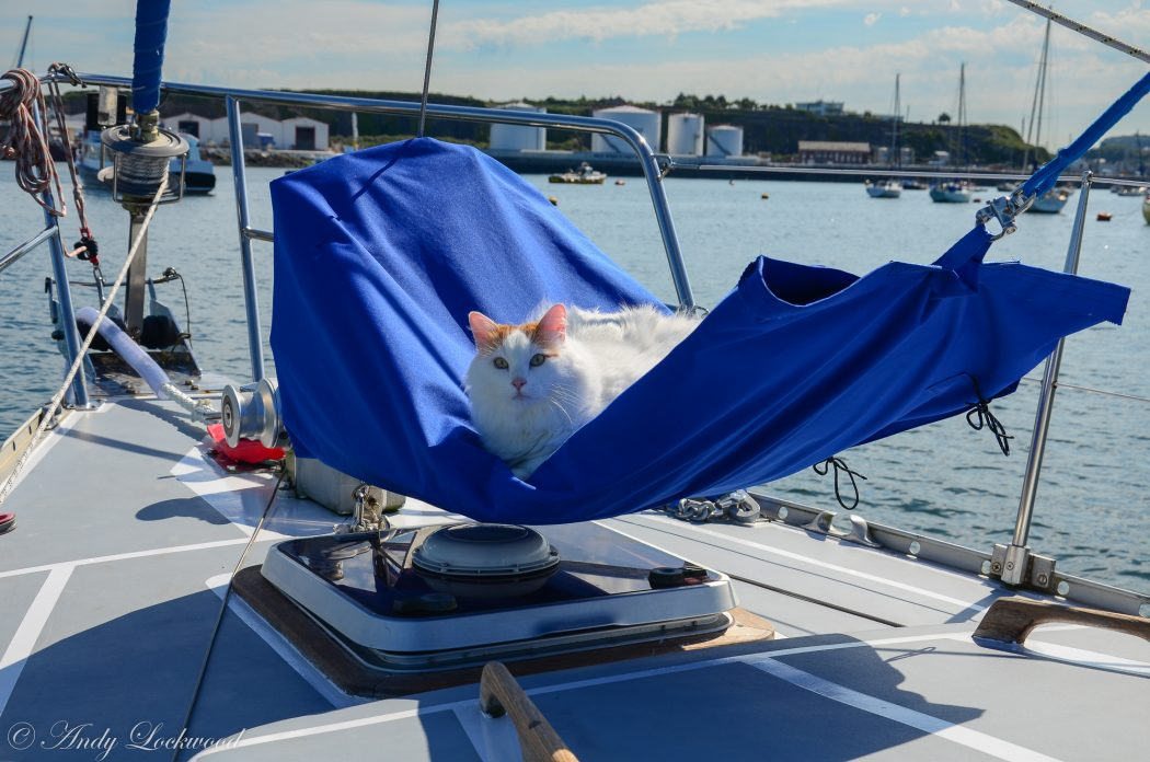 Salty Sea Cat on Boat