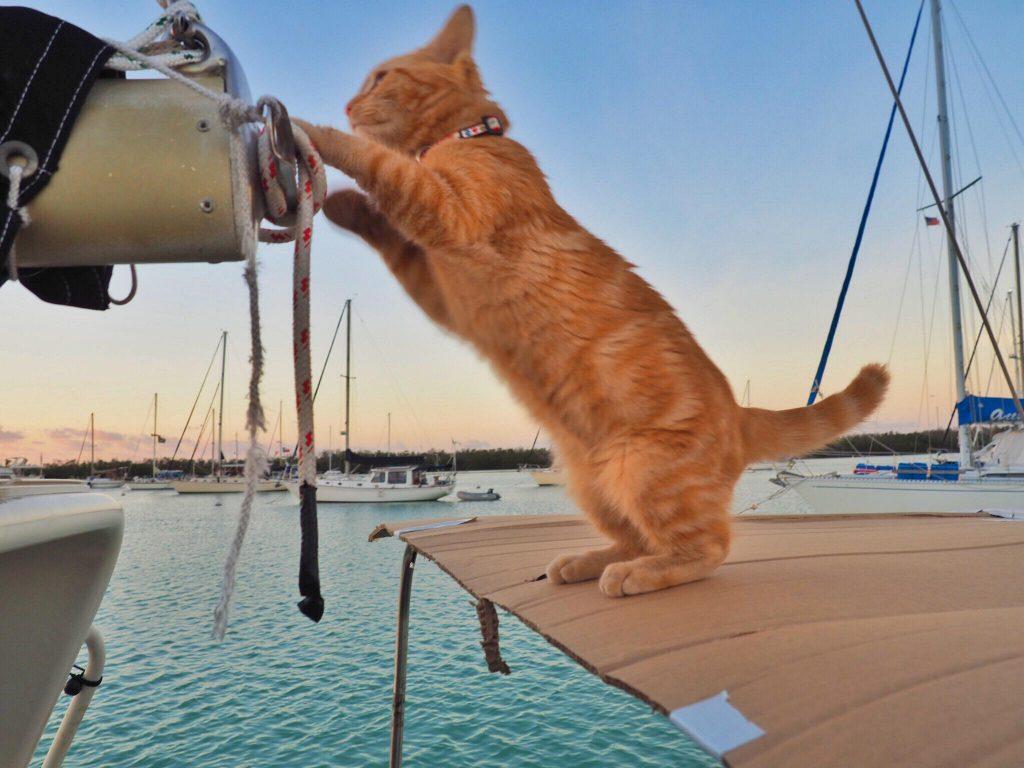 Captain Ahab on Boat