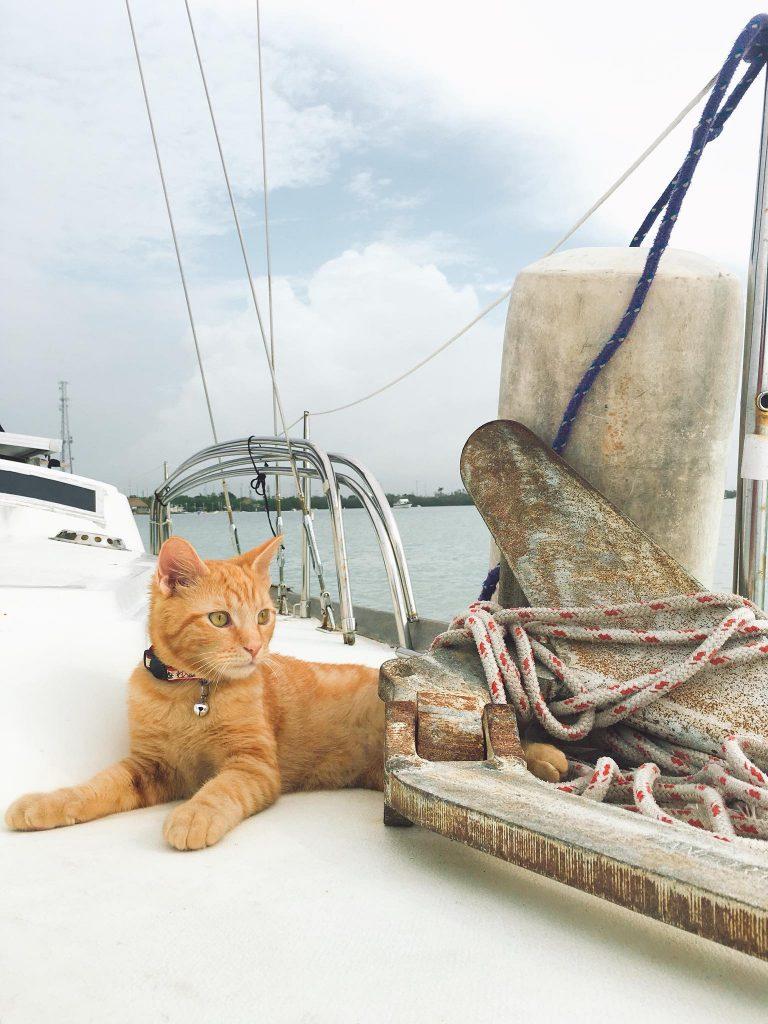 Ahab on Deck