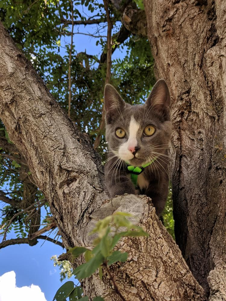 Parsley cat in tree