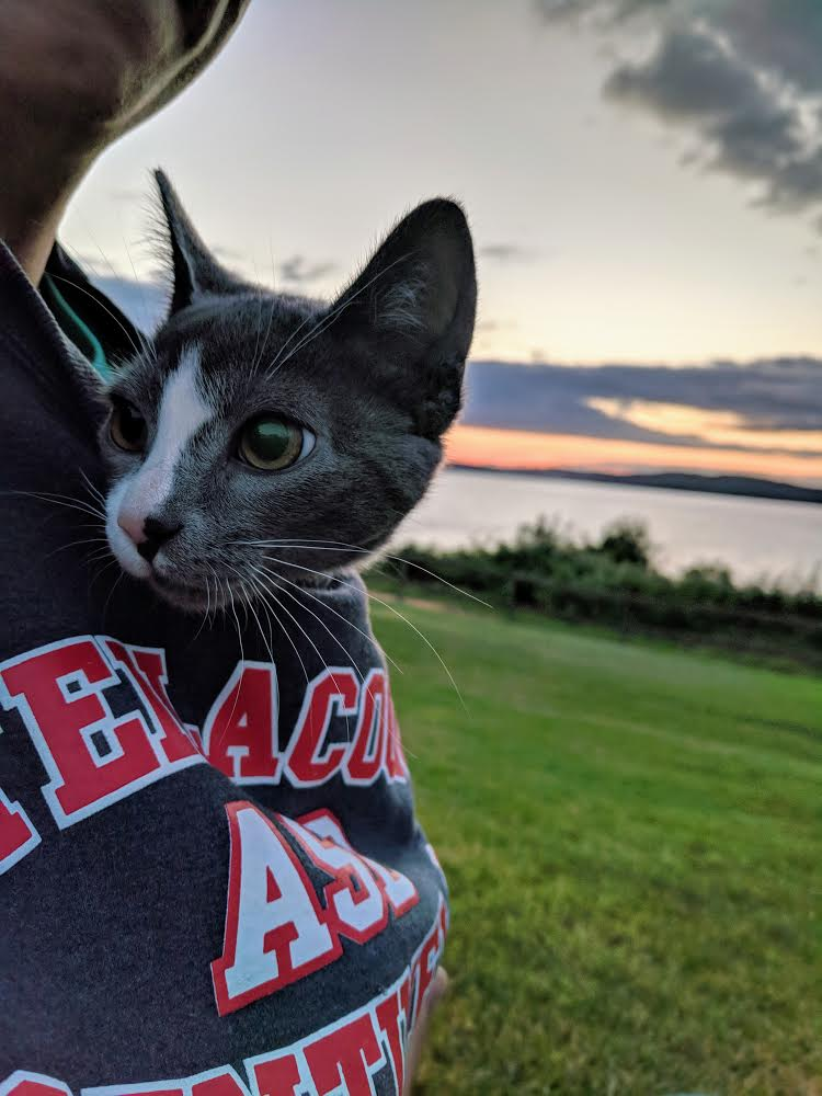 adventure cat in sweatshirt