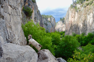 Artemis the cat exploring canyon
